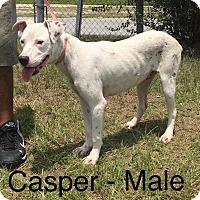Adopt A Pet :: Casper - Waycross, GA