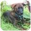 Photo 4 - Labrador Retriever Mix Puppy for adoption in Miami Beach, Florida - Sheina,Fl