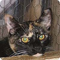 Adopt A Pet :: Delilah - Bulverde, TX
