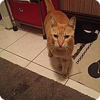 Adopt A Pet :: Arnold - Brooklyn, NY