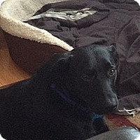 Adopt A Pet :: Blaine - PENDING, in Maine - kennebunkport, ME