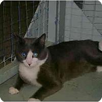 Adopt A Pet :: Gatineau - Mission, BC