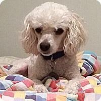 Adopt A Pet :: Reggie - St. Robert, MO