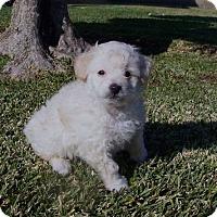 Adopt A Pet :: Uno Snowflake - La Habra Heights, CA