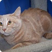 Adopt A Pet :: Momson - Colorado Springs, CO