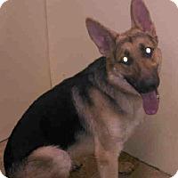 Adopt A Pet :: ROCKY - Tully, NY
