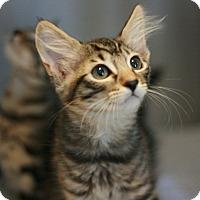 Adopt A Pet :: Solaris - Canoga Park, CA
