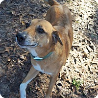 Adopt A Pet :: Willie - Ravenel, SC