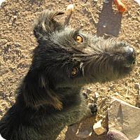 Adopt A Pet :: Kaitos - Santa Fe, NM