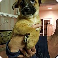 Adopt A Pet :: SALLY - Winnetka, CA