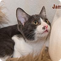 Adopt A Pet :: Jamaica - San Juan Capistrano, CA