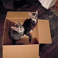 Adopt A Pet :: Yolo - Brooklyn, NY