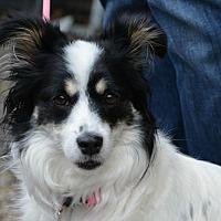 Adopt A Pet :: Maggie - Northville, MI