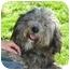 Photo 1 - Dandie Dinmont Terrier Mix Dog for adoption in Berkeley, California - Lazlo