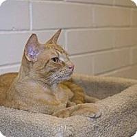 Adopt A Pet :: Rusty - New Port Richey, FL