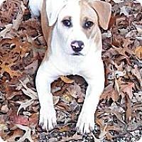 Adopt A Pet :: SUNSHINE - Glastonbury, CT