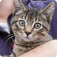 Adopt A Pet :: Bean - Irvine, CA