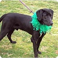 Adopt A Pet :: Black Jack-pending - kennebunkport, ME