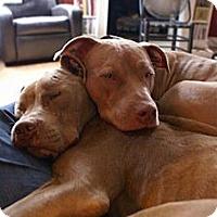 Adopt A Pet :: Tillman - Chattanooga, TN