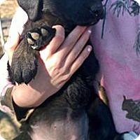 Adopt A Pet :: Dahlia - Ranger, TX