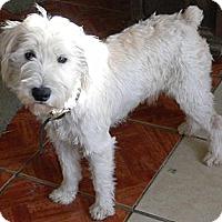 Adopt A Pet :: Scruffy - San Ysidro, CA