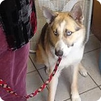 Adopt A Pet :: Zoey - Crawfordville, FL