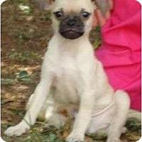 Adopt A Pet :: Simba - Allentown, PA
