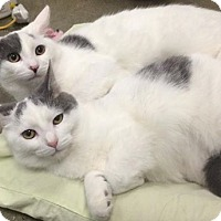 Adopt A Pet :: Thelma and Louise - Pittstown, NJ