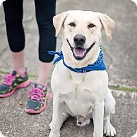 Adopt A Pet :: Lucas - Kingwood, TX