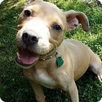 Adopt A Pet :: Rex - Snellville, GA