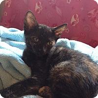 Adopt A Pet :: Brie - Mesa, AZ