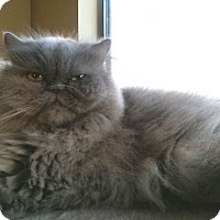 Adopt A Pet :: Sassy Le Belle - Beverly Hills, CA