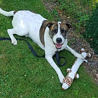 Hound (Unknown Type) Mix Dog for adoption in Rockaway, New Jersey - Noble Clayton