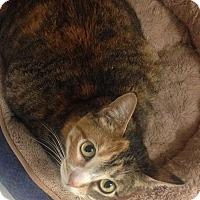 Adopt A Pet :: Bailey Bug - Newport Beach, CA