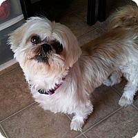 Adopt A Pet :: Shadow Turner - Urbana, OH