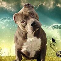 Adopt A Pet :: YA-YA - Fairfield, CA