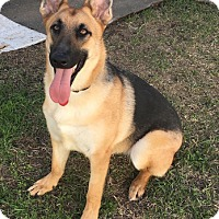 Adopt A Pet :: Deacon - Houston, TX