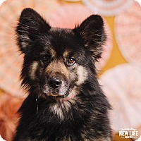 Adopt A Pet :: Uno - Portland, OR