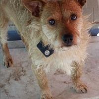 Adopt A Pet :: Faunzy - Kingsland, TX