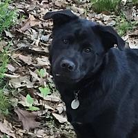Adopt A Pet :: Nikki - Southbury, CT