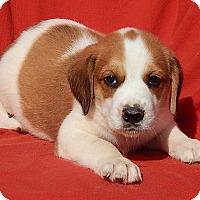 Adopt A Pet :: Ace (6.5 lb) VIdeo - Williamsport, MD