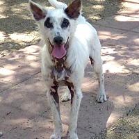 Adopt A Pet :: **DRACO - Peralta, NM