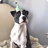 Adopt A Pet :: Sawyer (COURTESY POST) - Baltimore, MD
