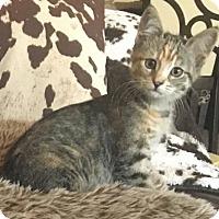 Adopt A Pet :: Cali - Corona, CA