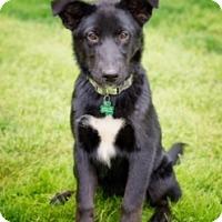 Adopt A Pet :: Junie - Lewisville, IN