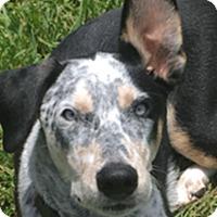 Adopt A Pet :: Bandit - The Woodlands, TX