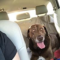 Adopt A Pet :: Lance - Jesup, GA