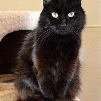 Adopt A Pet :: Charm - St. Charles, MO