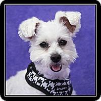 Adopt A Pet :: Mr. Peanut - Ft. Bragg, CA