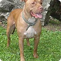 Adopt A Pet :: Zeus - Roaring Spring, PA